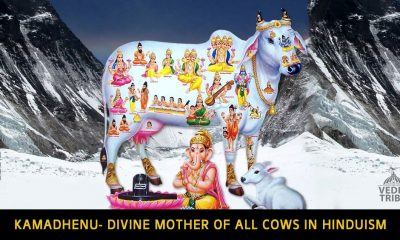 Kamadhenu- Divine mother of all cows in Hinduism