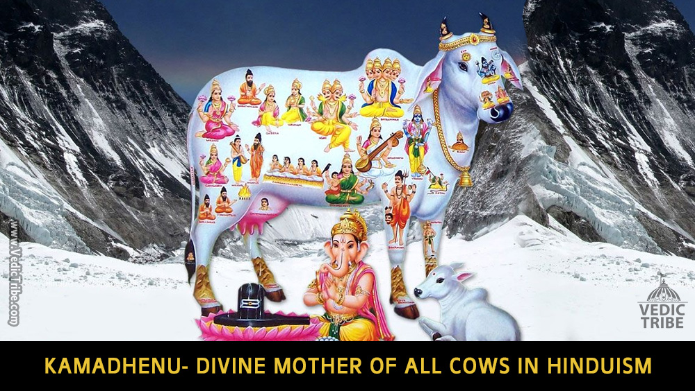 Kamadhenu- Divine mother of all cows in Hinduism